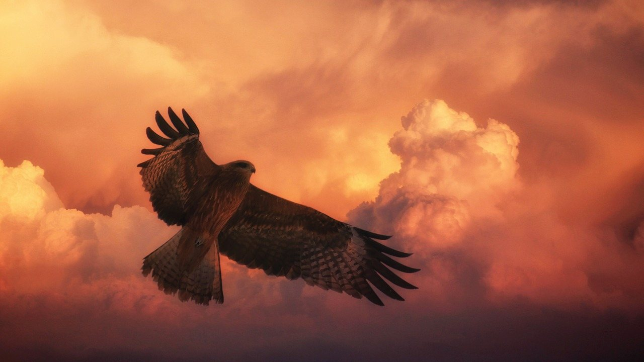 Sunset Hawk